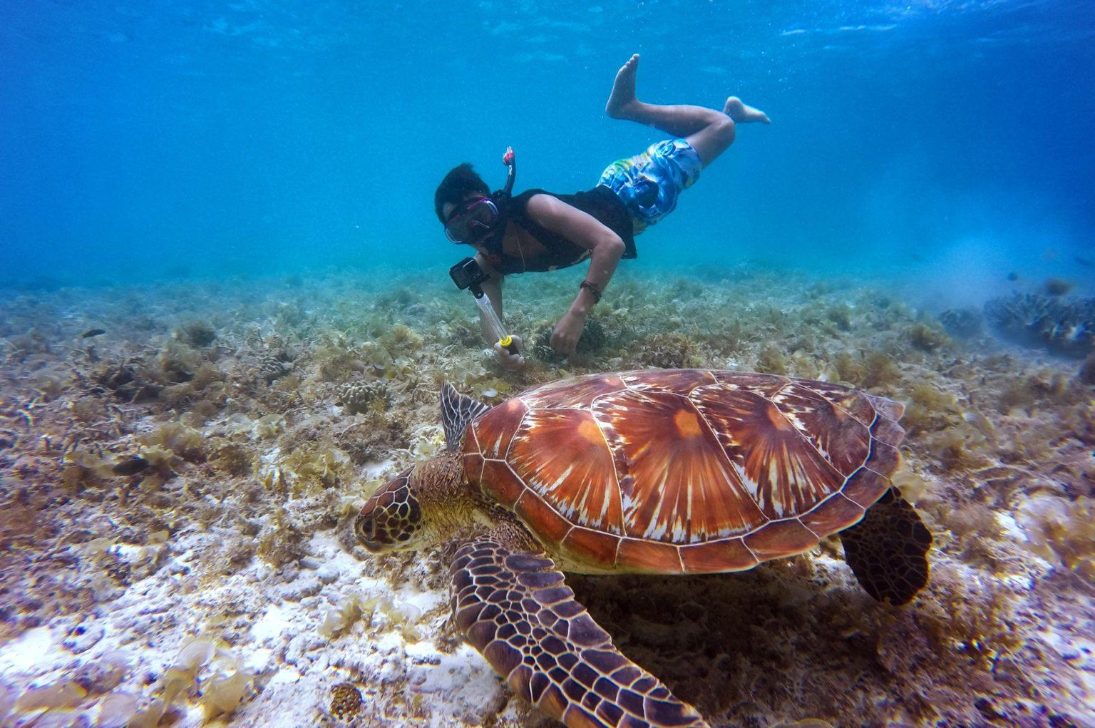 brown-tortoise-in-body-of-water-beside-man-3041869