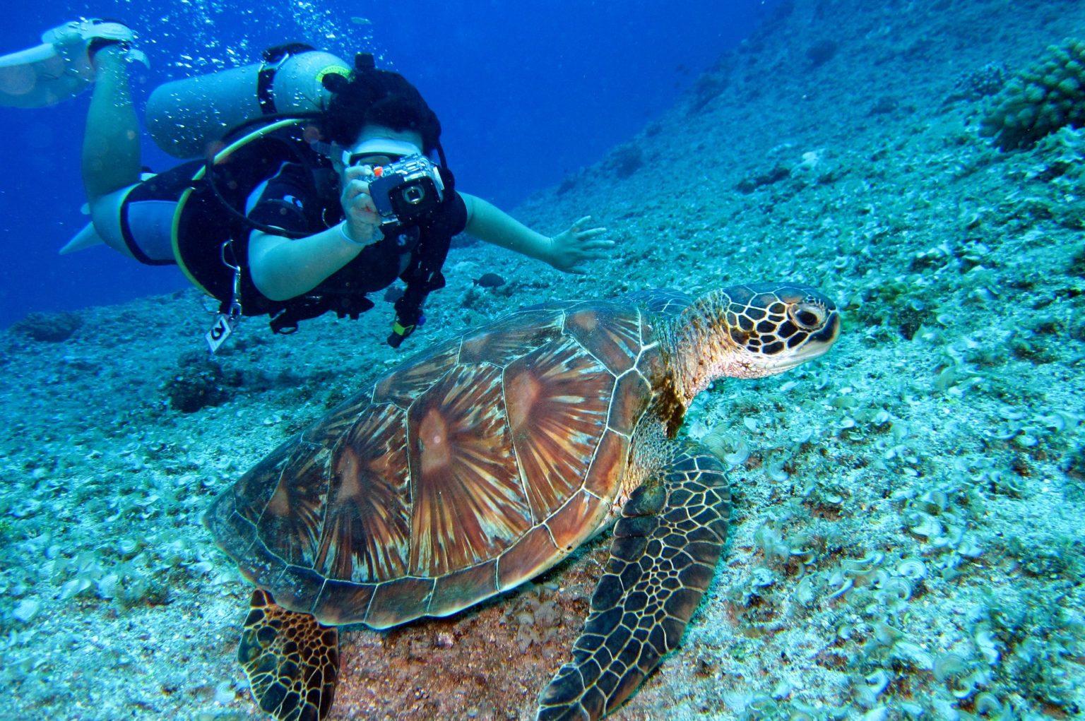 person-takes-photo-of-tortoise-1645028